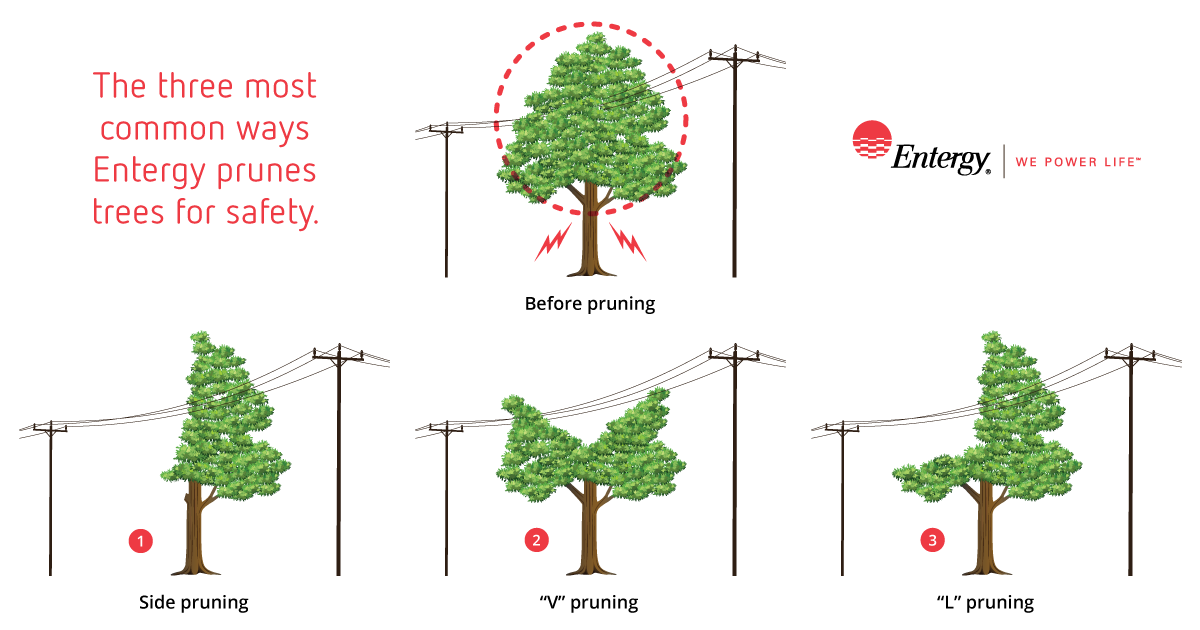 How We Trim Trees Entergy Life